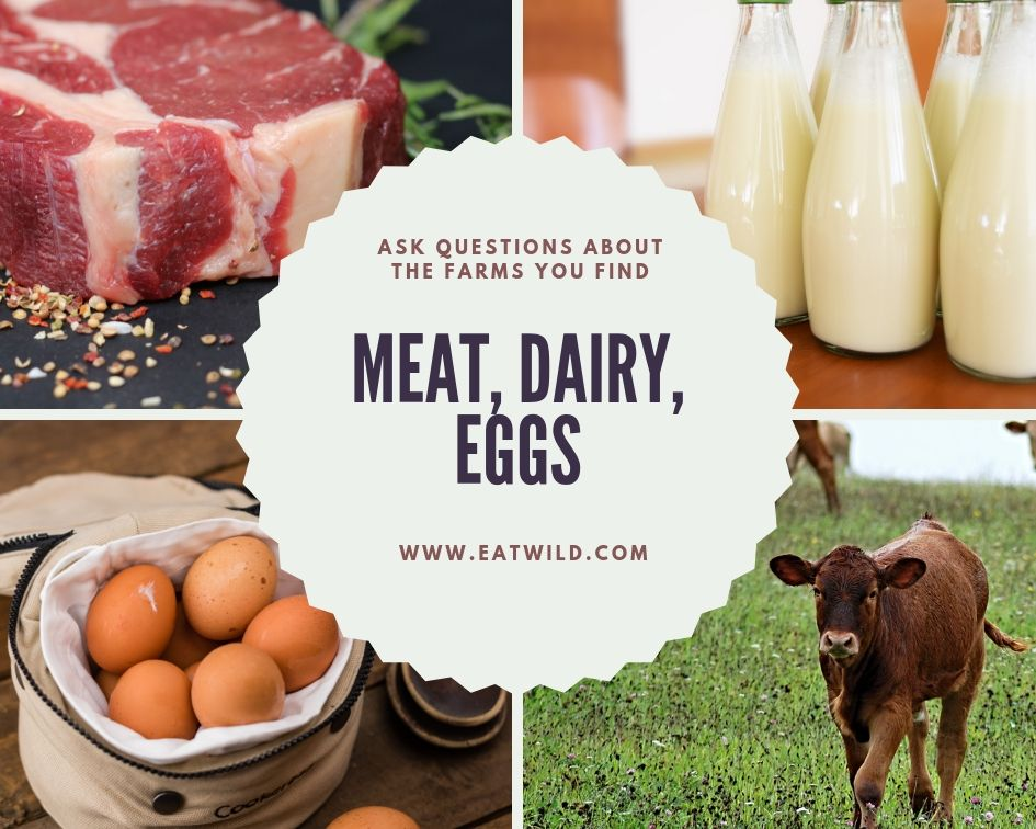 four images: steak, milk, eggs, a cow